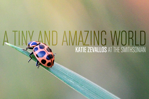 A Tiny and Amazing World: Katie Zevallos at the Smithsonian
